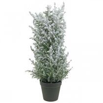 Genévrier artificiel en pot, plante artificielle H47cm