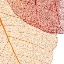 Squelettes de feuilles orange/rouge 200 p.