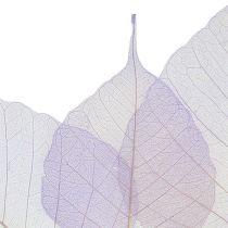 Squelettes de feuilles de saule violet clair (200 p.)