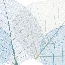 Lot de squelettes de feuilles de saule, bleu, gris 200 p.