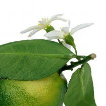 Citrons à la fleur 9,5cm vert 4pcs