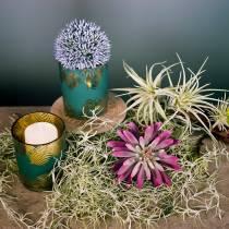 Succulente 15cm Violet