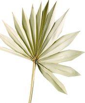 Palmspear Sun naturel 30pcs