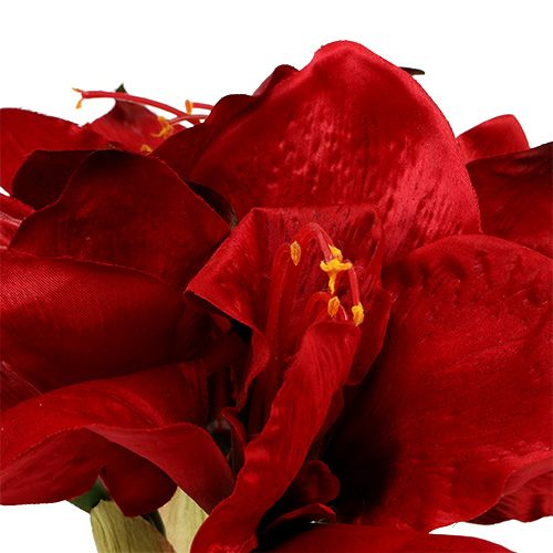 Amaryllis Rouge L 73cm 2pcs