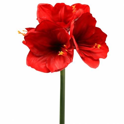 Amaryllis rouge 75cm