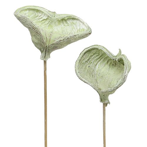 Badam am Stiel Vert 25 pièces