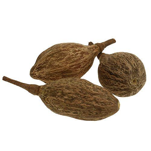 Fruit de baobab épluché 15-20 cm nature 5 p.