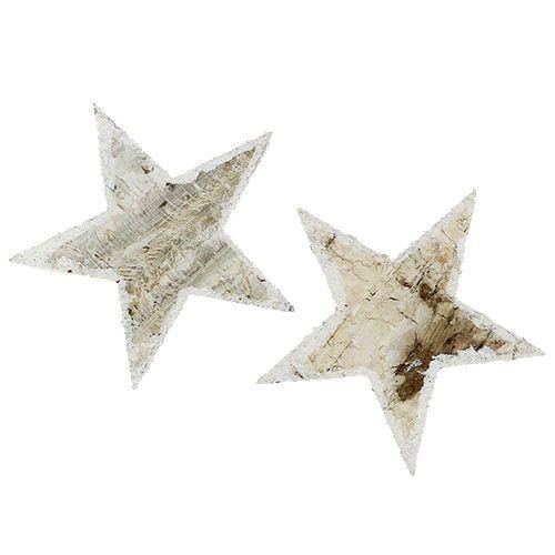Étoiles de bouleau nature neigeuse 9cm 15pcs