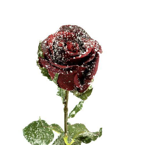 Rose décorative rouge recouverte de neige Ø 6 cm 6 ex.