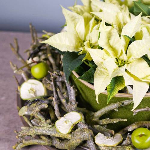Branche d'immortelle ou plante curry, vert 500 g