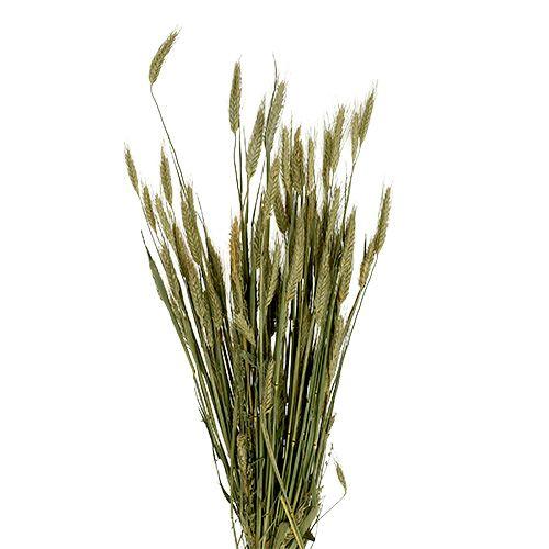 Décoration de grain Triticale comme Bund Natur 1bund