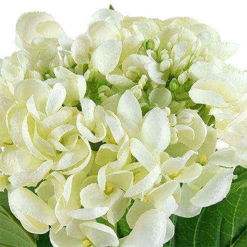 Hortensia 60cm blanc