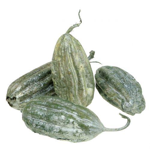 Fruits de luffa verts 14 cm 10 p.