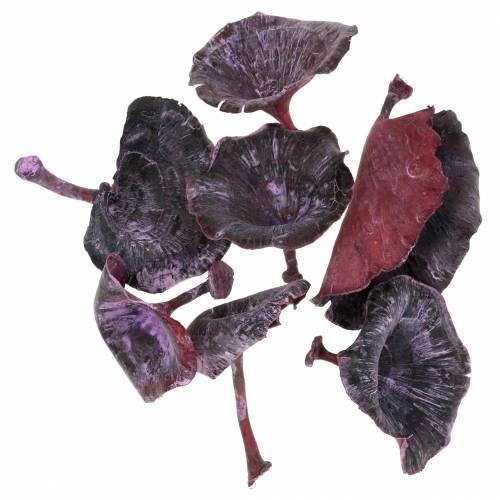 Kalix champignon lilas, blanchi à la chaux 100pcs