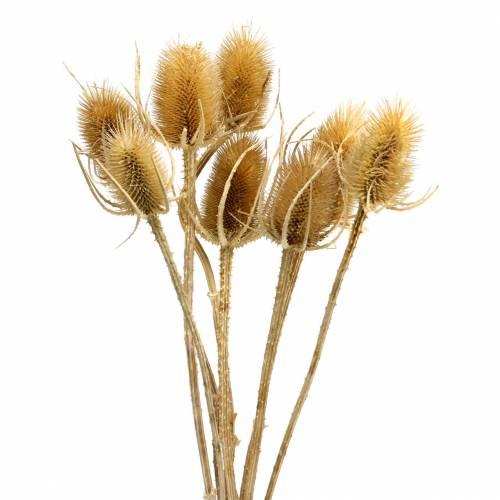 Fleurs séchées chardon nature 8pcs