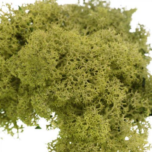 Mousse décorative pour l'artisanat Mousse naturelle vert clair conservée 40g