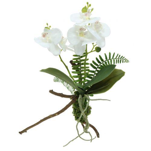 Orchidée blanche avec motte de mousse et racines 36 cm