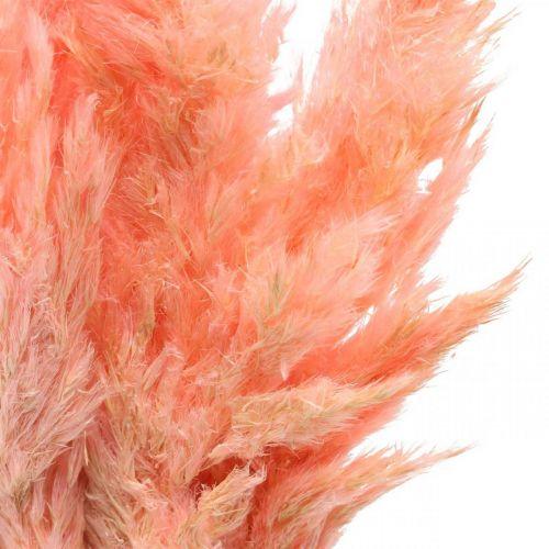 Herbe de la pampa fleurs sèches roses séchées 65-75cm 6pcs en bouquet