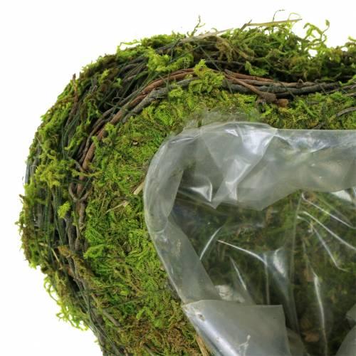 Cœur de plante vigne, mousse 22cm x 20cm H7cm