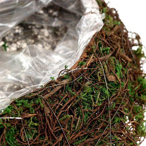 Plante vague vigne, mousse 45cm x 18cm H7cm