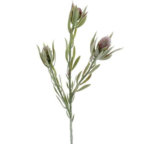 Bouquet de Protea 43cm 6pcs
