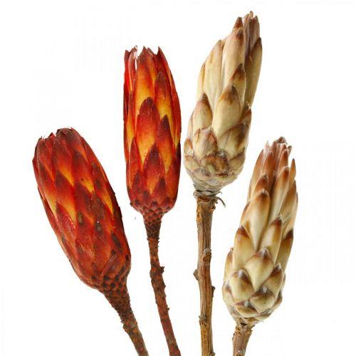 Protea Mix, Fleurs séchées respens Naturel / Rouge 13pcs
