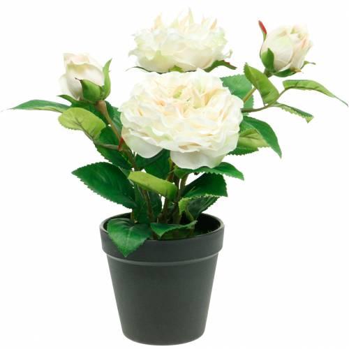 Pivoine dans un pot, rose décorative romantique, fleur de soie blanc crème