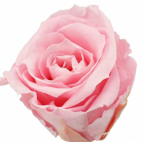 Roses éternelles moyennes Ø4-4.5cm rose 8pcs