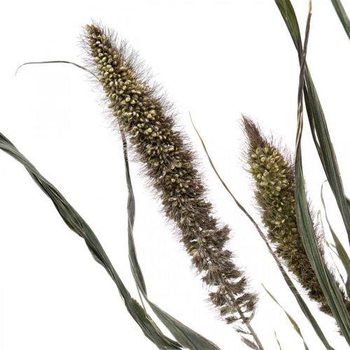 Fleurs séchées Setaria anthracite bouquet de millet naturel 100g