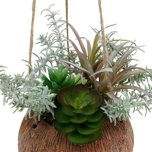 Succulentes vertes en pot à suspendre 24cm