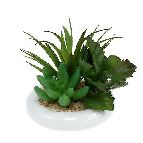 Succulentes en pot de céramique Ø12cm