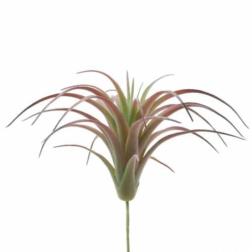 Tillandsia vert-rouge floqué 15cm 4pcs