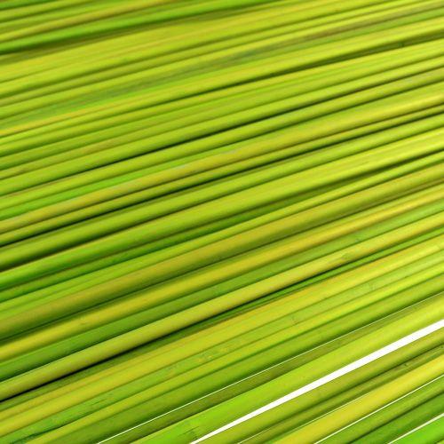 Baguettes décoratives Tonkin 70cm vert clair 150p