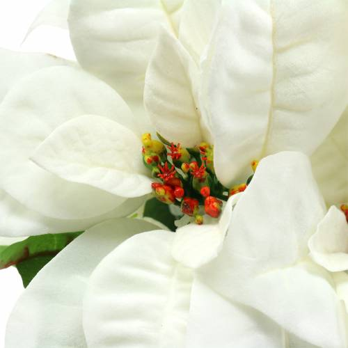 Poinsettia Bouquet Blanc 52cm