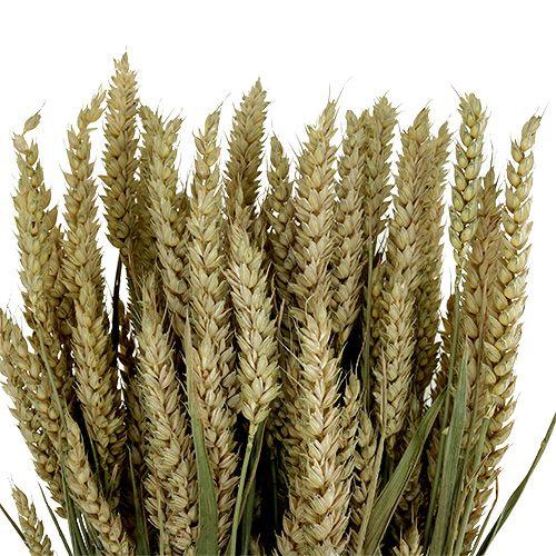 Blé Bund Natur 1St blé décoratif