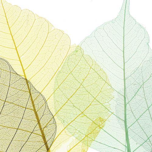 Lot de squelettes de feuilles de saule jaune, gris, turquoise 200 p.