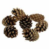 Cônes de pin de montagne 15 kg