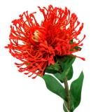 Protea Artificielle Rouge 73cm