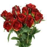 Rose Rouge 42cm 12pcs
