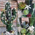 Figurine en mousse florale cactus noir 38cm x 74cm